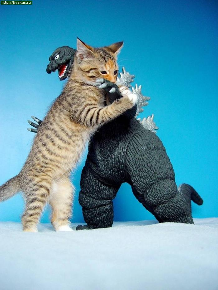 Кошачьи приколы 2