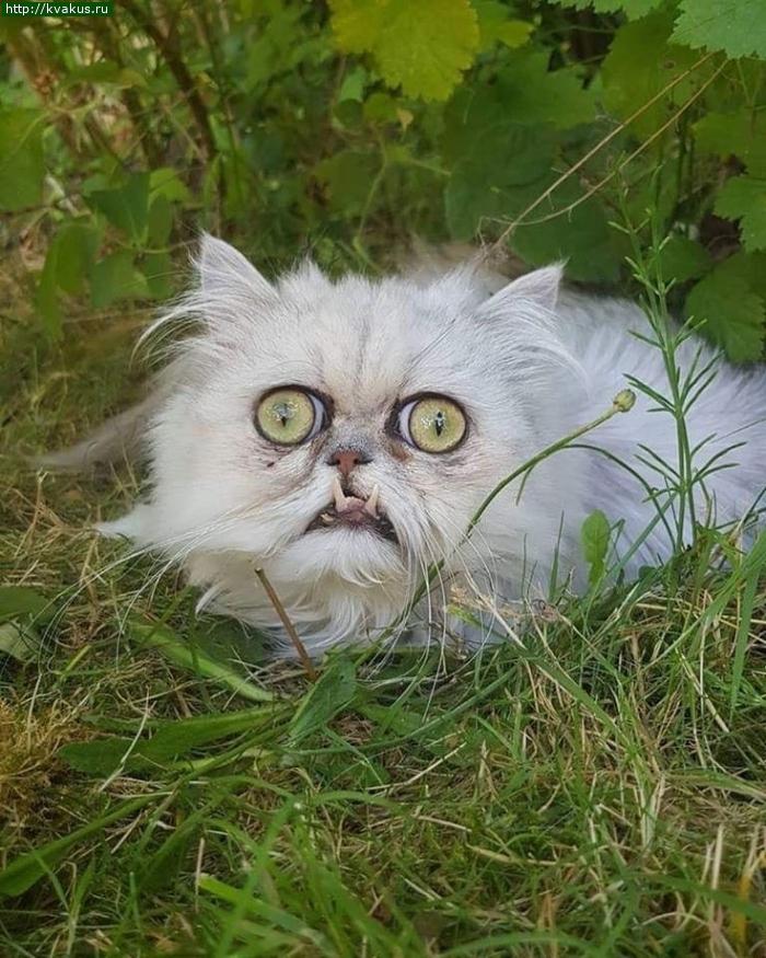 Кошачьи приколы
