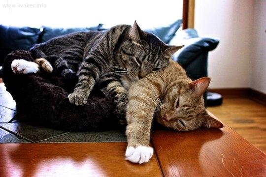 Кошачий сон
